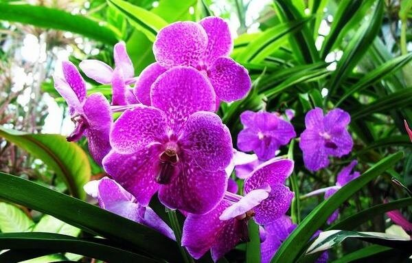 Orchids - Images of the world's most beautiful birthday bouquets, unique meaning