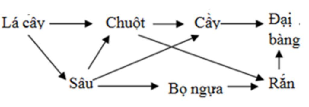 khai-niem-chuoi-thuc-an-va-luoi-thuc-an-cho-vi-du-minh-hoa